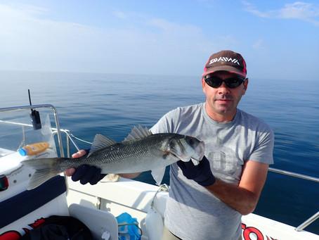 Brighton Inshore Fishing - Catch report 13th August 2020