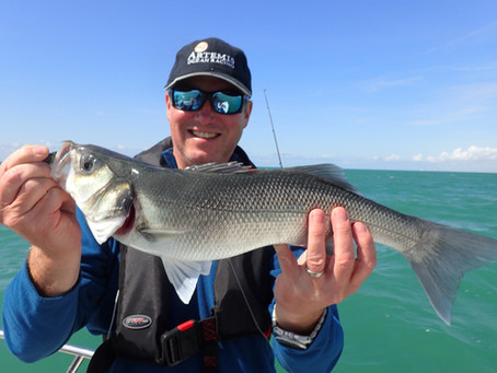 Brighton Inshore Fishing - Catch report 6th August 2017