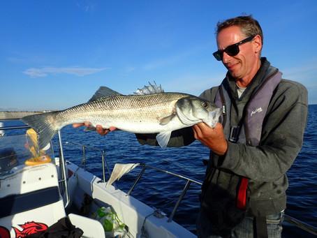 Brighton Inshore Fishing - Catch report 16th August 2020