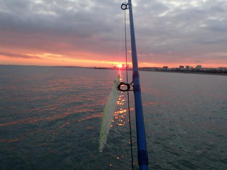 Brighton Inshore Fishing - Catch report 25th July 2017
