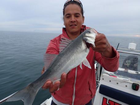 Brighton Inshore Fishing - Catch report 17th June 2020