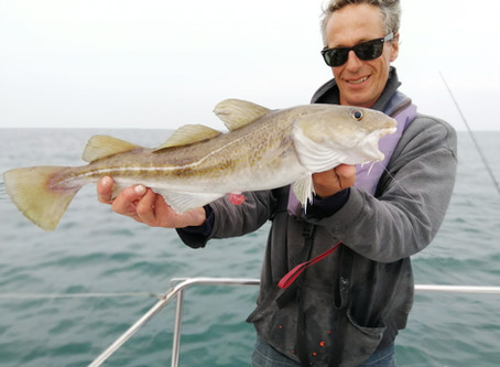 Brighton Inshore Fishing - Catch report 16th September 2020