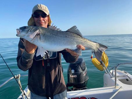 Brighton Inshore Fishing - Catch report 17th July 2021