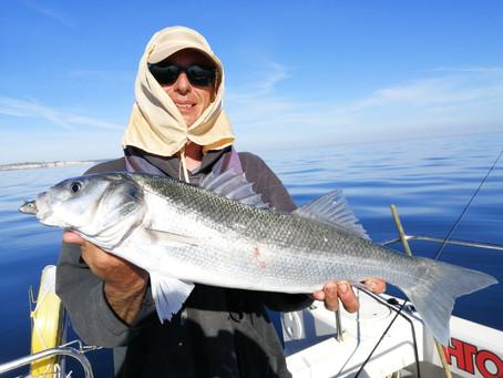 Brighton Inshore Fishing - Catch report 20th May 2020