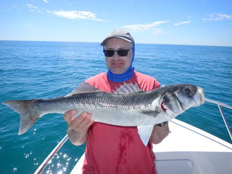 Brighton Inshore Fishing - Catch report 6th August 2020