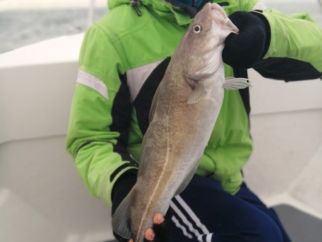 Brighton Inshore Fishing - Catch report 12th October 2020
