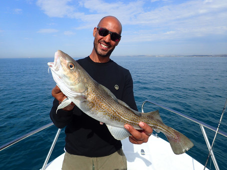 Brighton Inshore Fishing - Catch report 8th August 2020