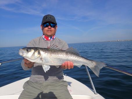 Brighton Inshore Fishing - Catch report 27th May 2020