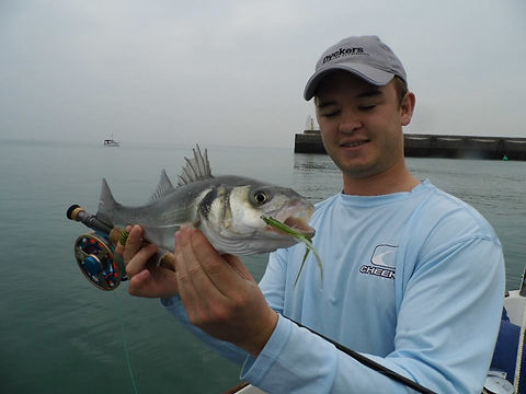 Fly fishing for bass in Sussex