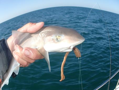 Brighton Inshore Fishing - Catch report 20th July 2020