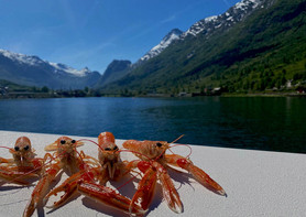 Dagens fangst, kreps i Nordfjorden - Olden Adventure