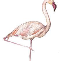 Flamingo frame option