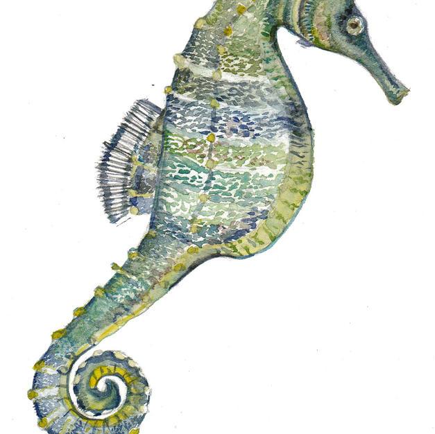 Seahorse frame option