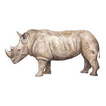 Rhino frame option