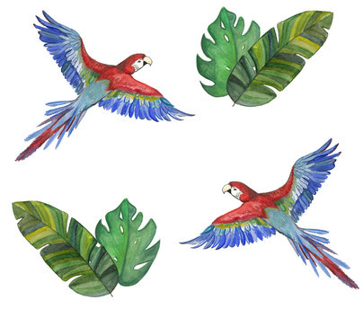 Macaw and leaf pattern