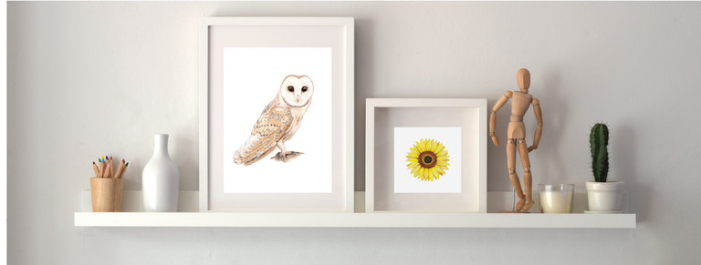 Barn owl and sunflower