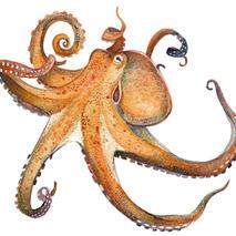 Octopus frame option
