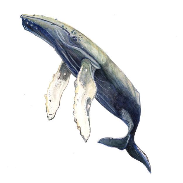 Whale frame option