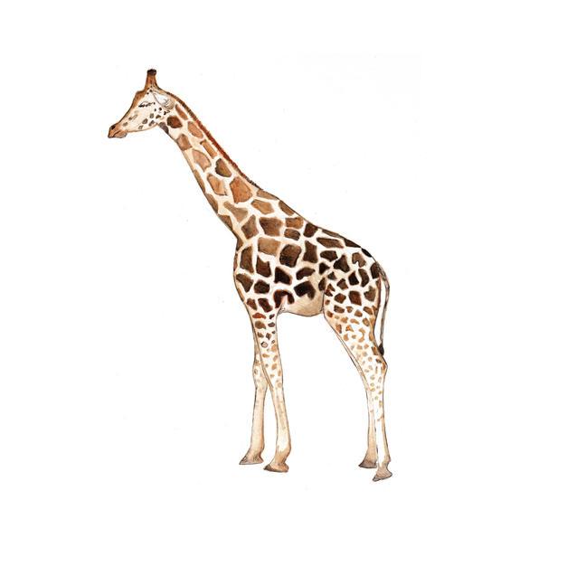 Giraffe frame option