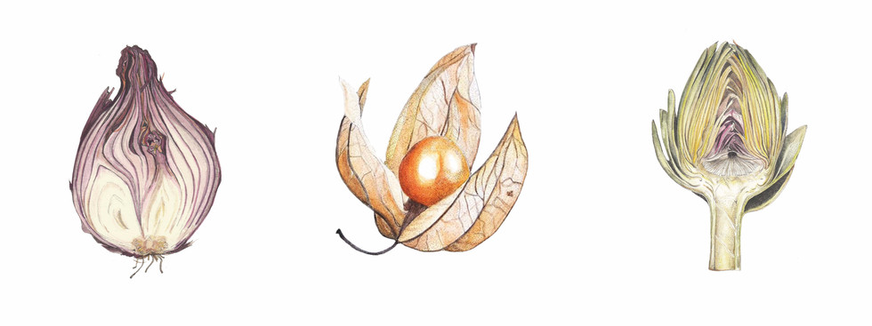 Onion, Physalis and Artichoke