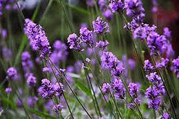 Botanical Massage