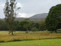 View of the front paddock