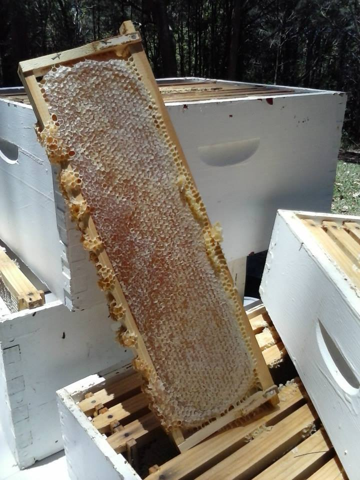Honeycomb Fresh from the Hive