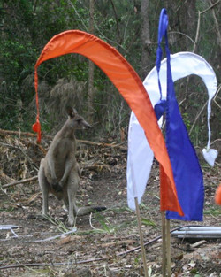 Kangaroo checking out the campsite