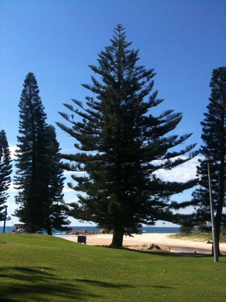 Front beach at South West Rocks