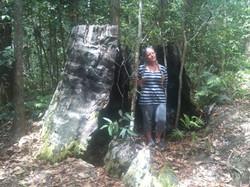 Remnant of Tree Stump