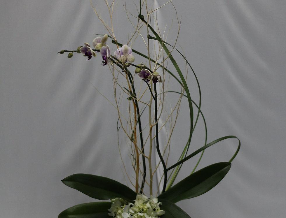 Orquídea  decorada en vidrio