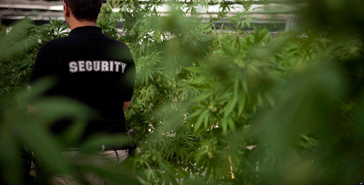 We fund security companies for cannabis businesses