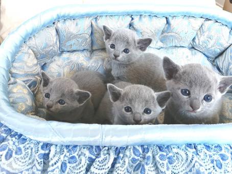 子猫達、元気です