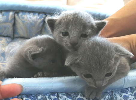 子猫達、元気です 2