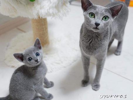 ラリーサの子猫達