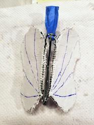Butterfly's bottom side