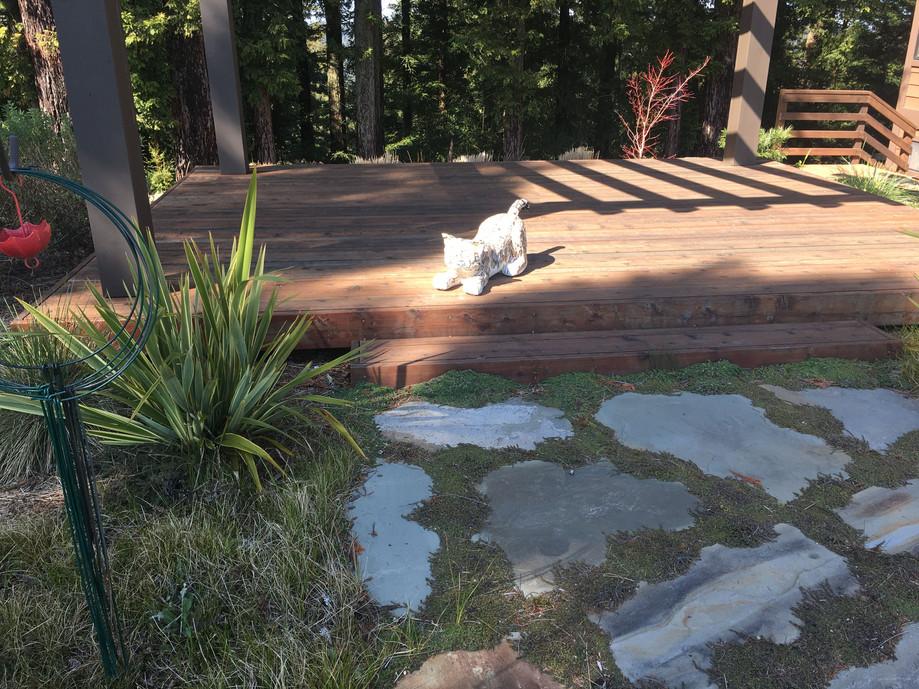 Reggie the Bobcat on the deck