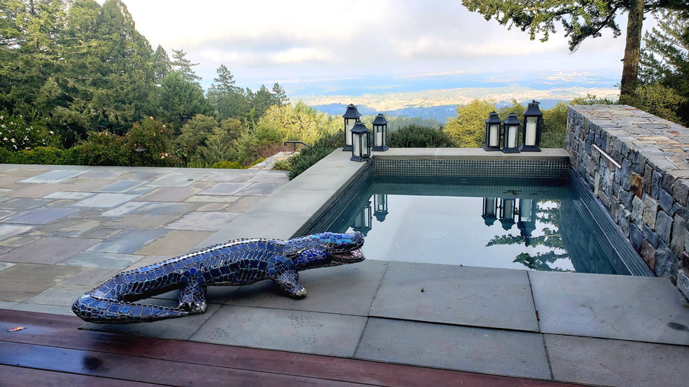 Bue the Alligator at pool