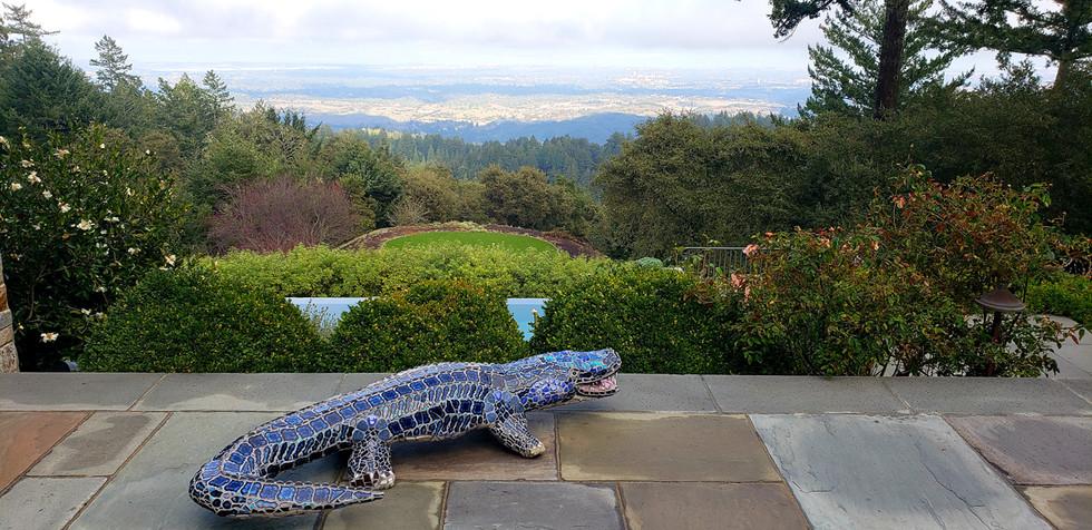 Blue the Alligator in the backyard