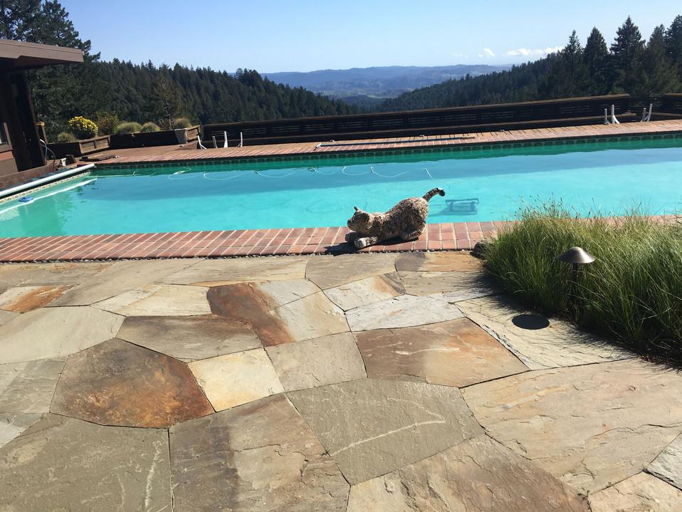 Reggie the Bobcat at the pool