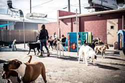 big-dog_play-yard