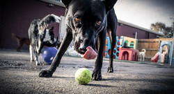 doggie-pause-joey