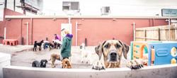 doggie-pause_dog-yard
