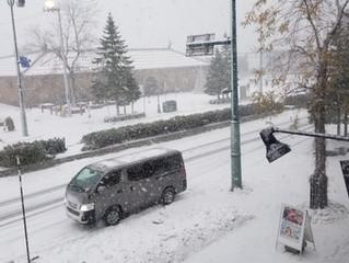 また、積雪です