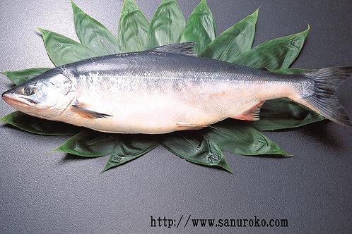 当店特選紅鮭1尾姿切(2.2-2.5kg)(頭・骨付きで切身)【冷凍発送】