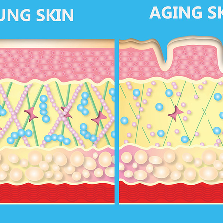 How does skin aging happen?