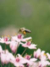 honeybee 4.jpg