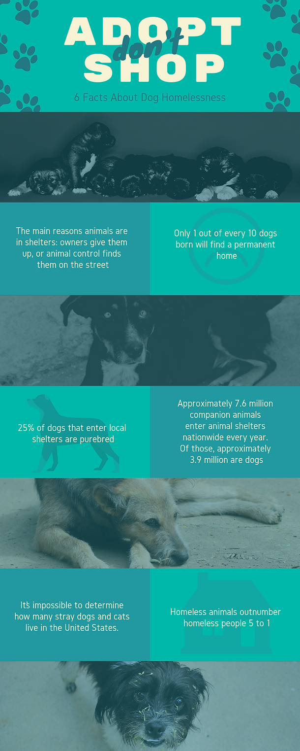 Dog Homelessness Infographic.png
