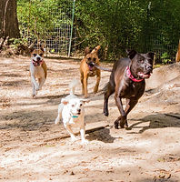 Dog-group-obedience.jpg