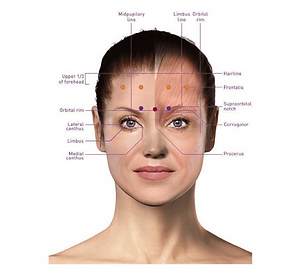 Botox-model.png